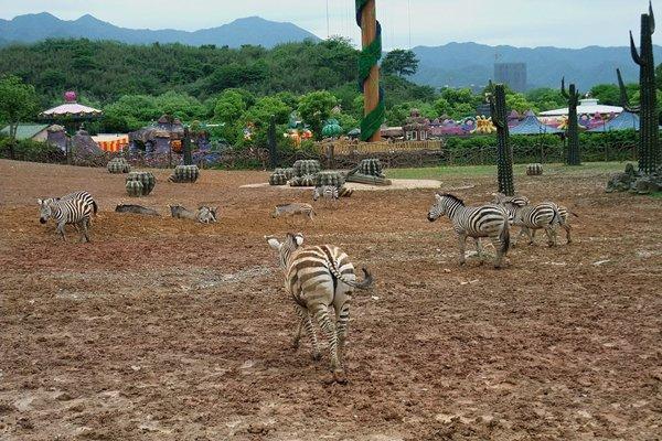 【独家定制】杭州千岛湖+野生动物园百兽狂欢节二日之