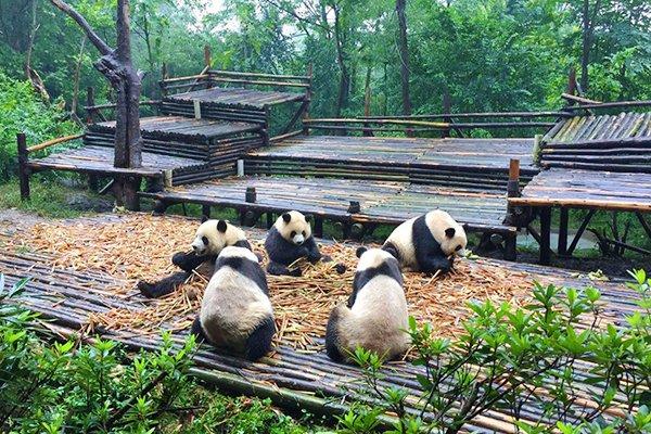 【乐享成都】成都6日5晚跟团游双飞·九寨-黄龙-都江堰熊猫乐园+锦里宽窄巷子