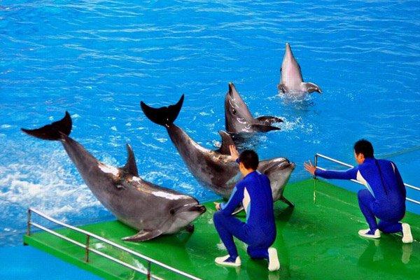 【魅力青岛 】探秘极地海洋世界 ● 超享五星度假休闲