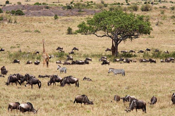 【景尚自组暑期狂欢】肯尼亚狂野10天之旅 动物迁徙季
