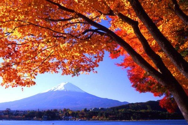 春秋自组~日本本州-东京、大阪、奈良、京都、富士山双飞7日游(2号线)