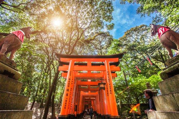 【双古都】日本6天5晚全景游直飞·伏见稻荷大社+金阁寺+奈良公园+心斋桥