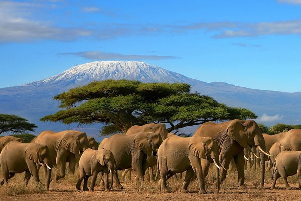 【摄影之旅】肯尼亚12日跟团游双飞·三大国家公园+两大湖泊+肯尼亚山费尔蒙狩猎度假村