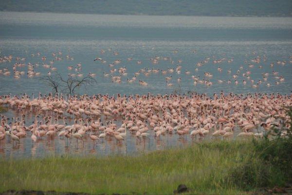 肯尼亚(两大国家公园+两大湖泊)9天动物迁徙之旅
