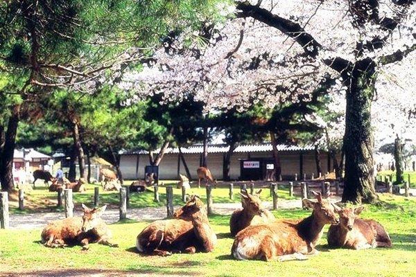 【乐享·特惠】日本本州双古都5晚6日游(无锡往返)
