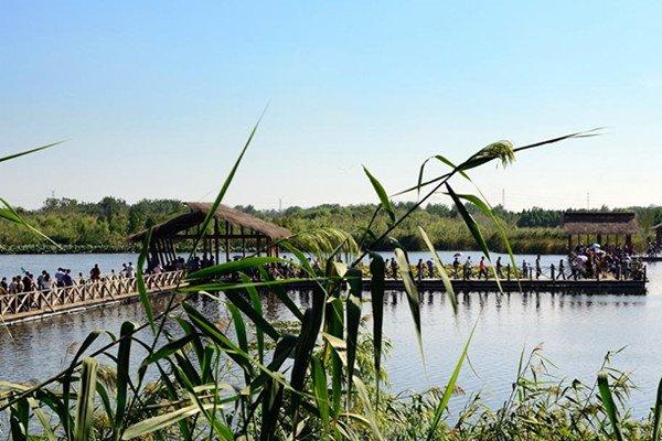 """【散】溱湖湿地公园、河横赏""""金灿灿""""油菜花一日游"""