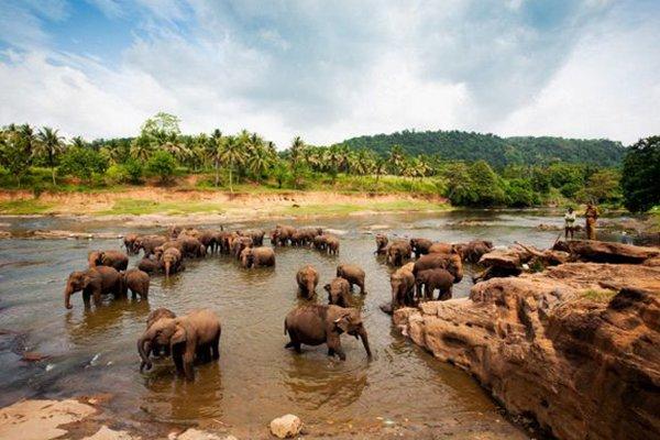 【浪漫海滨】斯里兰卡7日5哇晚跟团游直飞·米内日亚国家森林公园+康提湖+佛牙寺.入住两晚海景房