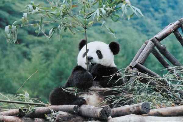 【川之行】四川6日5晚跟团游双飞.九寨+黄龙+都江堰+熊猫乐园+锦里+宽窄巷子