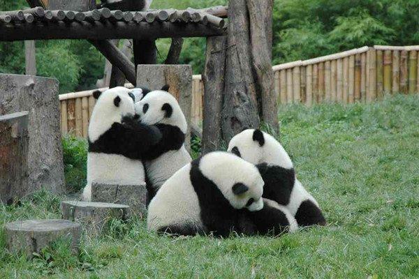 【九约遇见】四川双飞8日7晚跟团游.九寨+黄龙+熊猫乐园+峨眉山+乐山