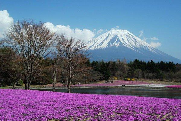 【动漫之城】日本6日5晚跟团游双飞·名古屋+大阪+京都+富士山.升级1晚温泉酒店