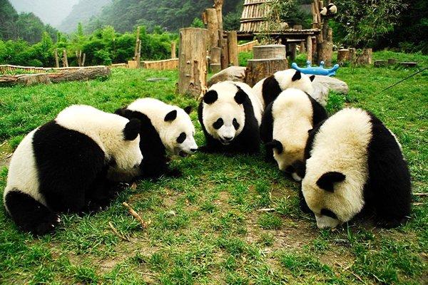 上海野生动物园,长风海洋公园亲子一日游