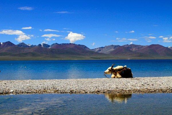 【尊享西藏】西藏12日跟团游双卧·羊卓雍湖+布达拉宫+大昭寺+纳木措