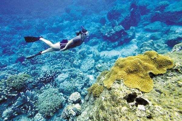 【海洋奇迹】美娜多5日4晚半自助直飞·万兴宫+关公庙+布纳肯海洋生态保护区