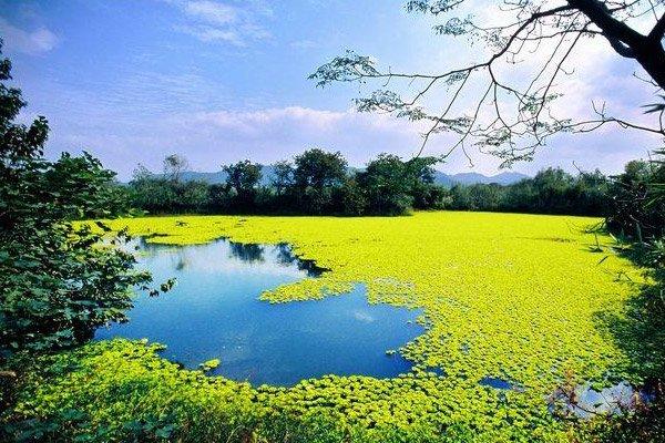 【江南水乡】杭州西湖+烟雨乌镇+西溪湿地+钱塘新景二日游
