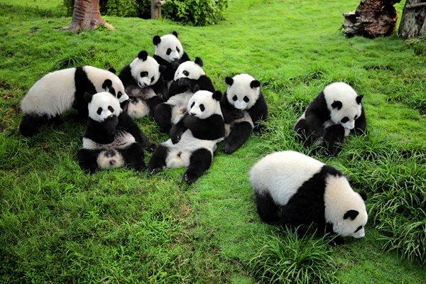尊享【纯净九寨】成都 九寨沟 黄龙 熊猫乐园双飞五天品质纯玩