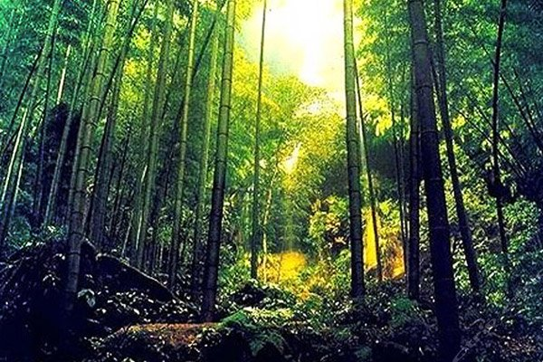 【休闲】安吉藏龙百瀑+中国大竹海一日游