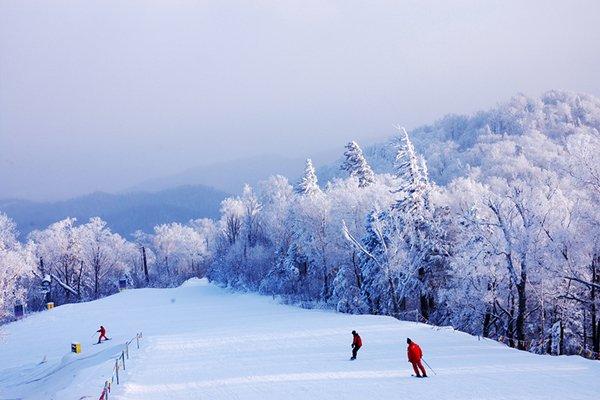 【奇趣东北】哈尔滨5日4晚跟团游双飞·亚布力顶级滑雪+鱼皮部落+冰河雪谷+伏尔加庄园