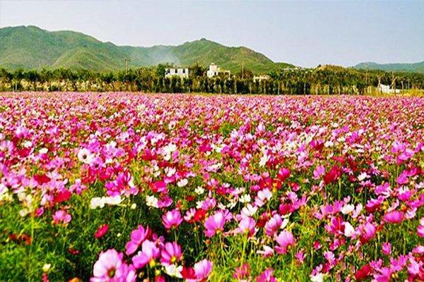 亚龙湾国际玫瑰谷双飞五日游(常州-三亚)图片