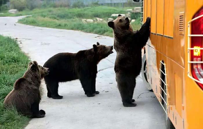【散】魔幻上海,野生动物园亲子野趣,纯玩一日游